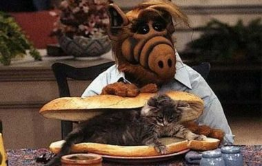 F2 Alf-gato