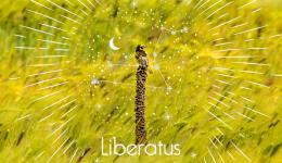 liberatus